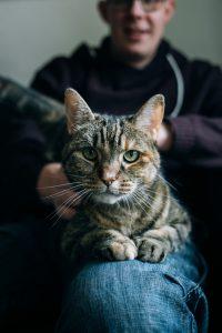 Lastige verkoper laat kat je speklapje opeten!